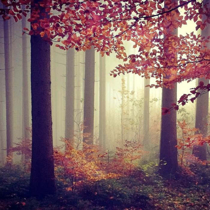 Mariko Klug–3rdPlace–Trees